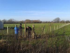 Completing the fencing on a crisp morning