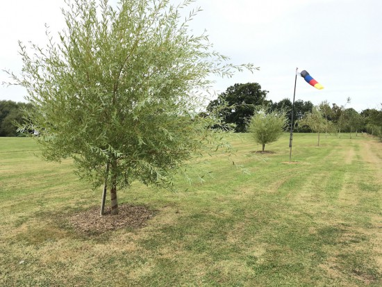 Wonderful grassed safety zone, part of which is to be planted with a meadow flower mix.